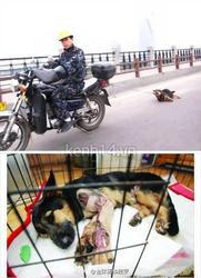 Phẫn nộ người đàn ông kéo lê chú chó trên đường